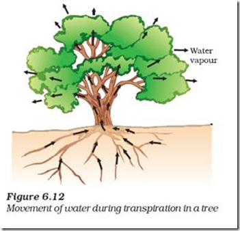 Biology X | LIFE PROCESSES | Transportation in Plants - CBSE Tutorials